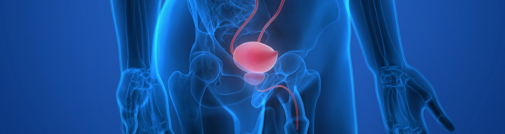 prostate